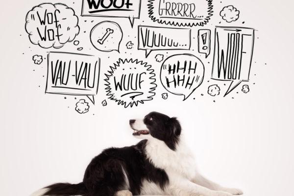 Η γλώσσα του σώματος ενός σκύλου