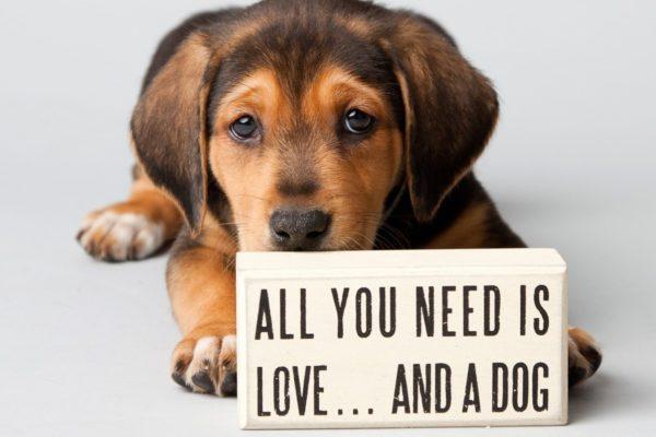 Η υιοθεσία ενός σκύλου είναι απόφαση ζωής !