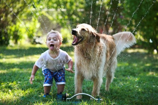 Make sure your children and dogs have a great relationship