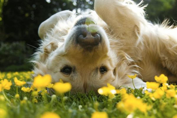 Ανοιξιάτικες αλλεργίες & σκύλος .